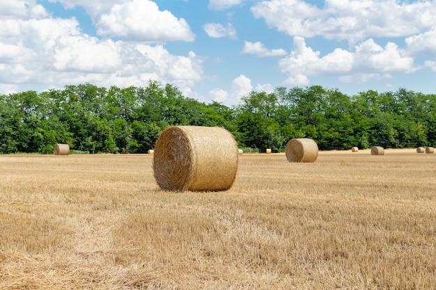 Céréales récoltées blé orge champ de grains de seigle, avec des meules de foin balles de paille piquets de forme ronde