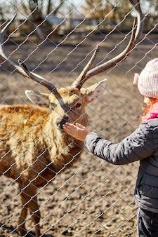 Le cerf adulte mignon lèche la main d'une petite fille, enfant, cerfs vivant dans le domaine de la nature, zoo