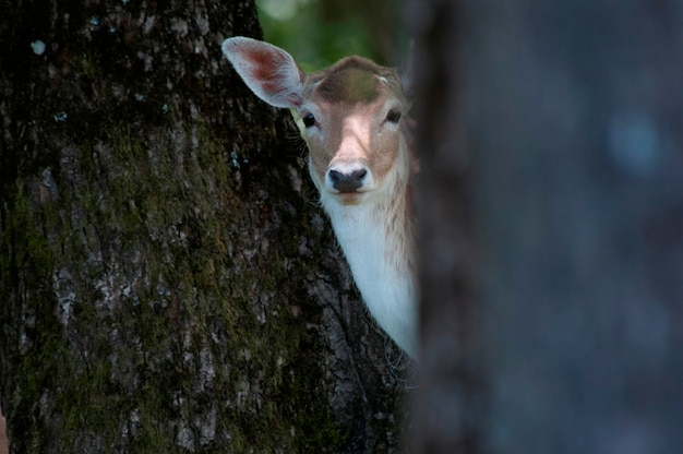 Un cerf dans un bois