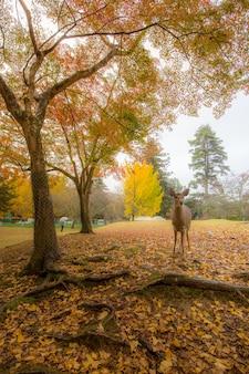 Cerf dans le parc de nara
