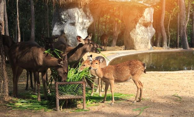 Cerf debout dans le zoo.