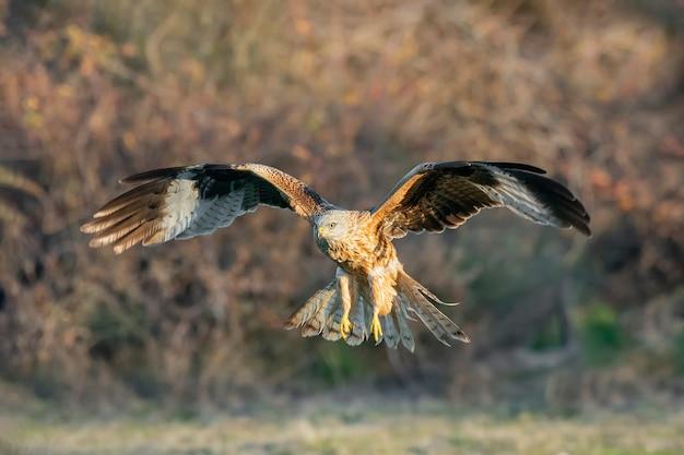 Cerf-volant rouge en vol face à la caméra