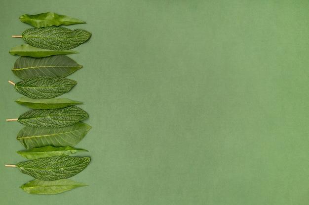 Cerise feuilles cadre sur fond vert