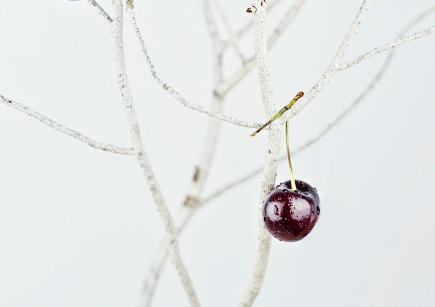 Une cerise rouge suspendue à une branche blanche