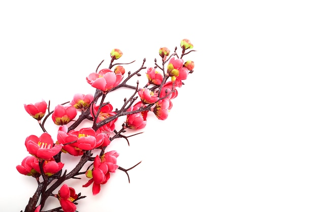 Cerisier en fleurs avec rose vif