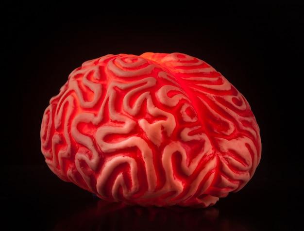 Cerveau humain en caoutchouc