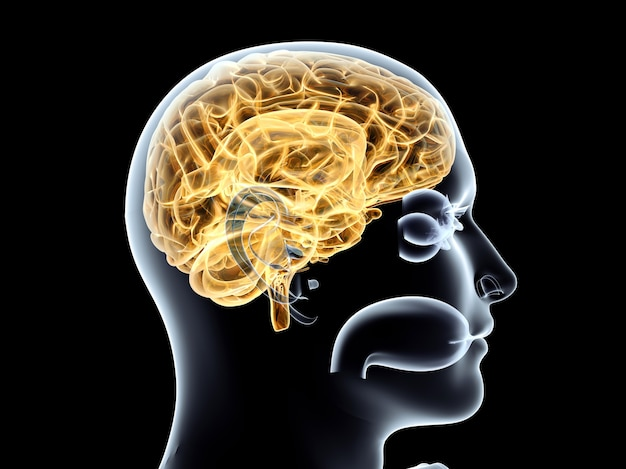 Le cerveau humain. illustration de rendu 3d. isolé sur fond noir.