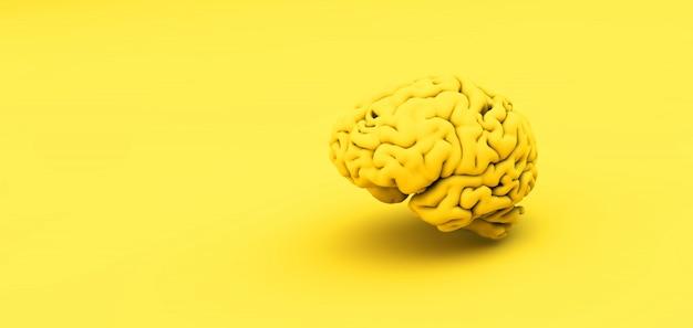 Cerveau jaune