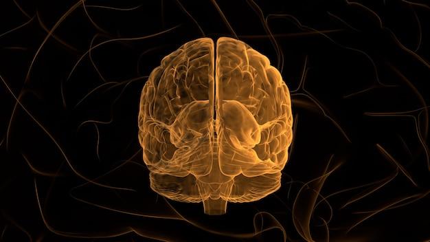 Cerveau orange