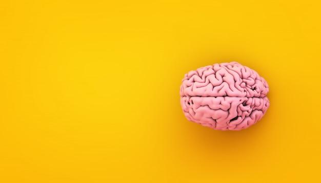 Cerveau rose sur jaune