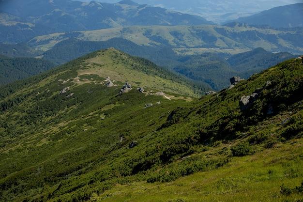 Chaîne de montagnes des carpates au matin d'été. beauté de la nature ukrainienne vierge sauvage. tranquillité.