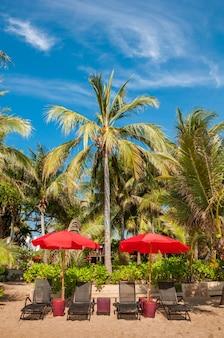 Chaise de plage sous parasol avec cocotiers