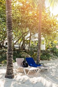 Chaises longues entre les arbres sur le sable