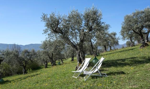Chaises de patio vides assis sur la pelouse en fin d'après-midi soleil