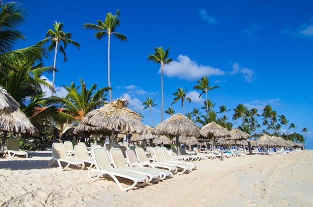 Chaises de plage sous un palmier