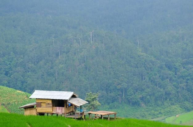 Chalet dans les rizières à l'asiatique, style de hutte de l'asie