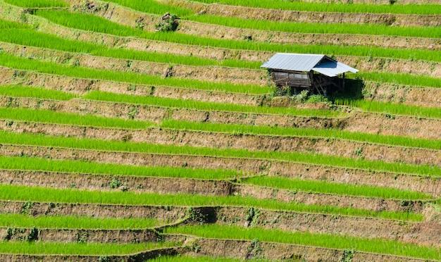Chalet dans les rizières, escalier de riz et fond