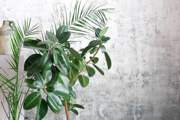 Chambre de feuilles de palmier sur fond de mur gris. concept floral moderne de jardin.