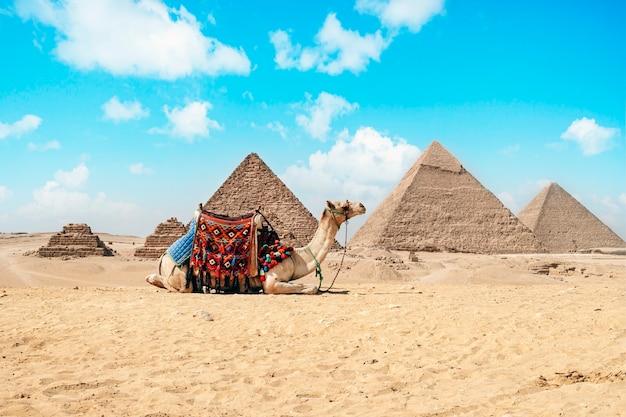 Chameau assis devant les grandes pyramides de gizeh en egypte. pyramides contre un ciel bleu lumineux