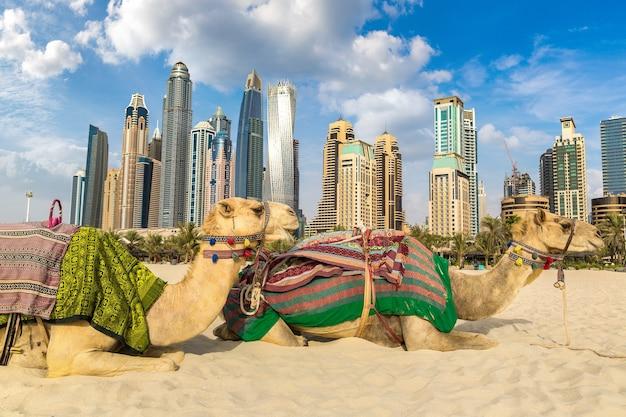 Chameau dans la marina de dubaï aux emirats arabes unis