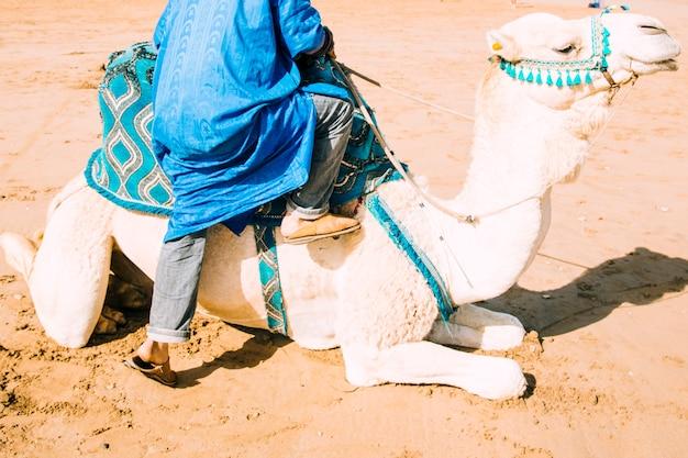 Chameau dans un paysage désertique au maroc