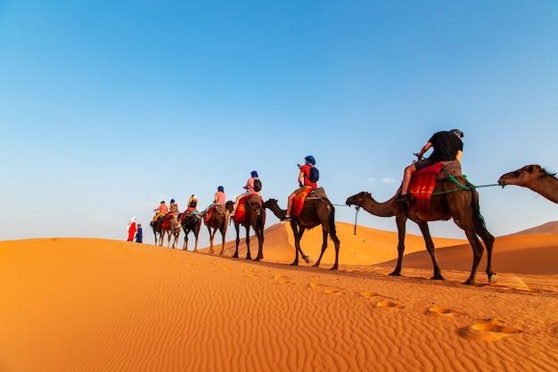 Chameaux au coucher du soleil dans le désert du sahara