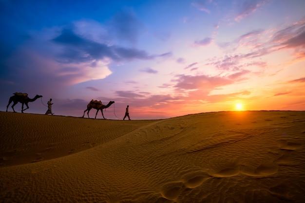 Chamelier indien chamelier avec des silhouettes de chameau dans les dunes au coucher du soleil. jaisalmer, rajasthan, inde