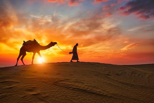 Chamelier indien chamelier avec des silhouettes de chameaux dans les dunes au coucher du soleil. jaisalmer, rajasthan, inde