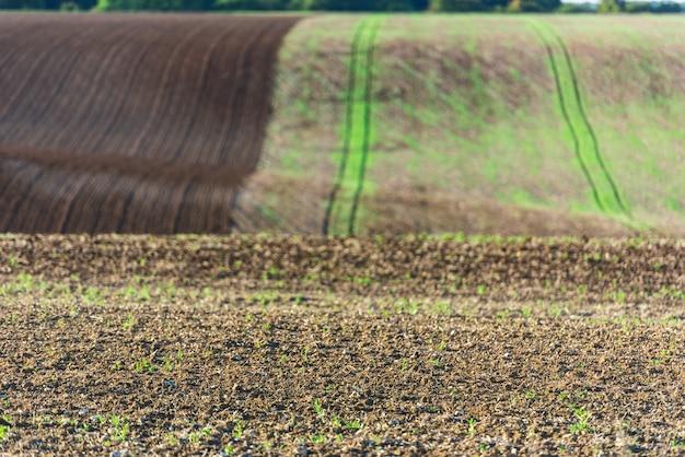 Champ agricole sur une colline avec de jeunes pousses. prise de vue horizontale