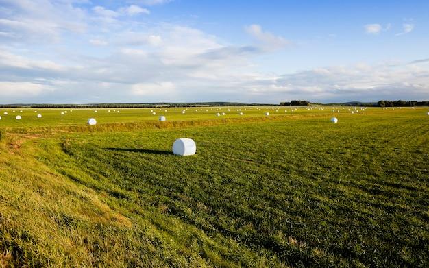 Un champ agricole où l'herbe est récoltée en hiver. balles d'herbe en cellophane