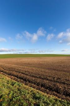 Un champ agricole labouré dans lequel des activités agricoles sont menées pour obtenir une grande récolte de légumes