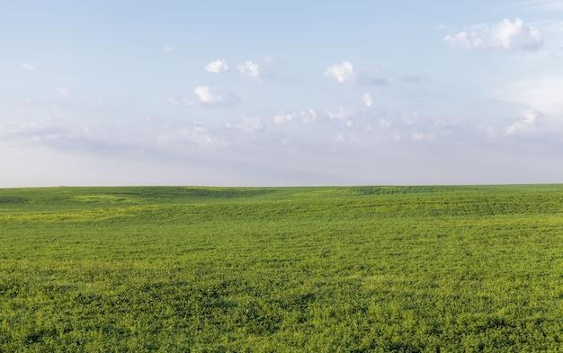 Un champ agricole sur lequel des cultures de céréales, de blé ou de seigle