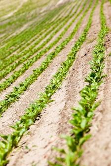 Champ agricole sur lequel faire pousser des cultures