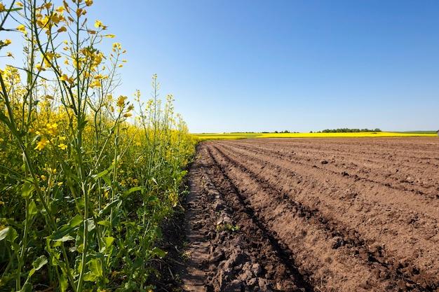 Champ agricole sur lequel poussent des pommes de terre et d'autre part champ de colza