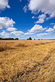 Un champ agricole sur lequel la récolte est effectuée