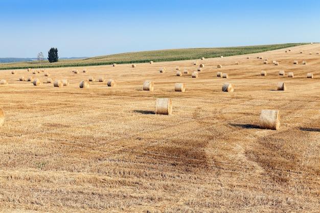 Un champ agricole sur lequel reposent des meules de paille après la récolte