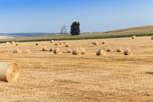 Un champ agricole sur lequel se trouvent des meules de paille après la récolte, ciel bleu
