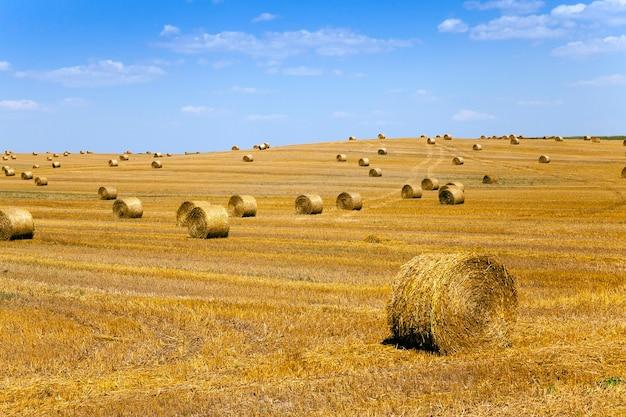 Un champ agricole sur lequel se trouvent une pile de paille après la récolte du blé