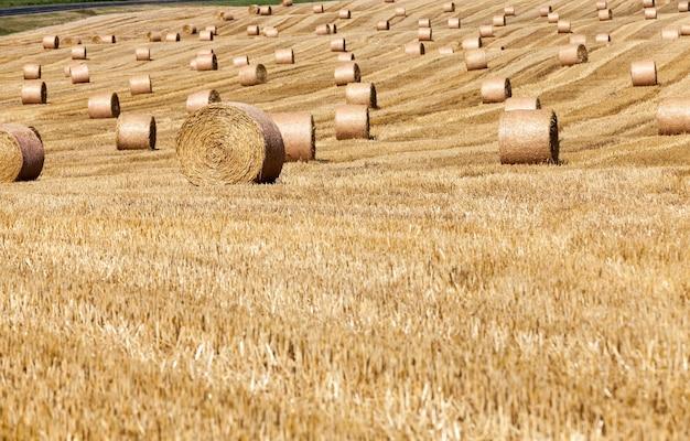 Champ agricole avec des piles de paille