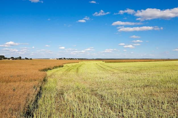 Un champ agricole, qui a effectué la récolte du colza
