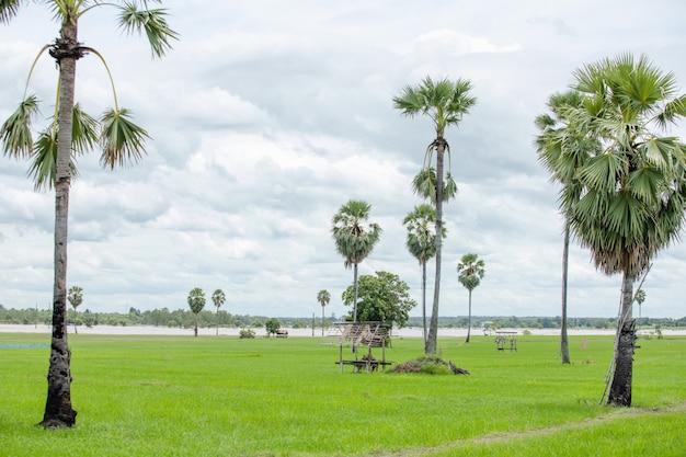 Champ d'agriculteur en plein air et cocotier