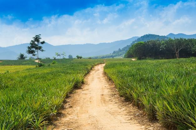 Champ d'ananas et de la route avec des nuages blancs en thaïlande