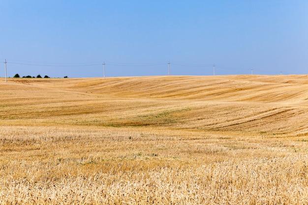 Champ après récolte champ agricole avec du blé biseauté après la récolte des céréales, petite profondeur de champ