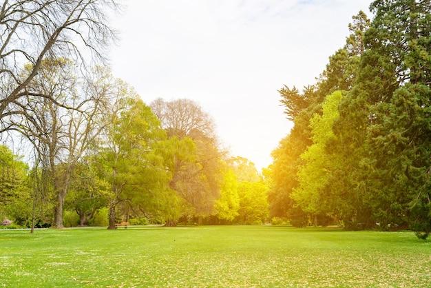Champ avec des arbres et le coucher du soleil