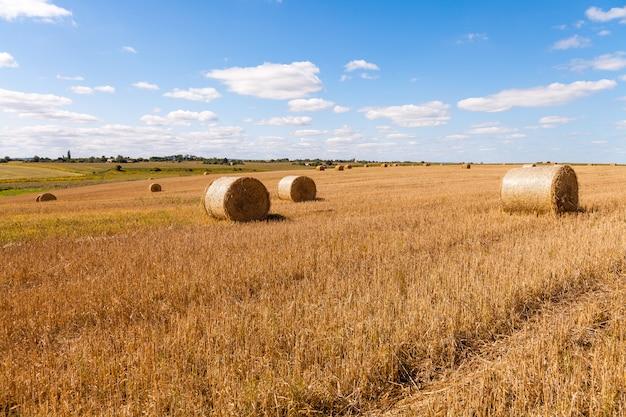 Champ de blé après la récolte avec des ballots de paille au coucher du soleil