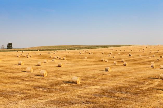 Champ de blé après récolte champ agricole où sur terre est resté sur la paille de blé après la récolte