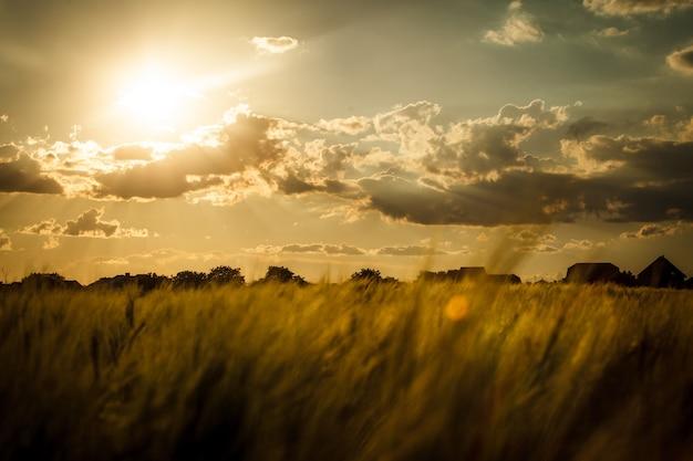 Champ de blé au-dessus du ciel avec le coucher du soleil. paysage naturel