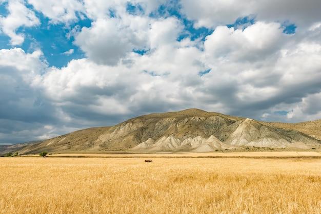 Champ de blé et ciel bleu avec des nuages