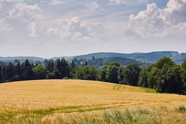Champ de blé doré, ciel bleu et collines couvertes de forêt