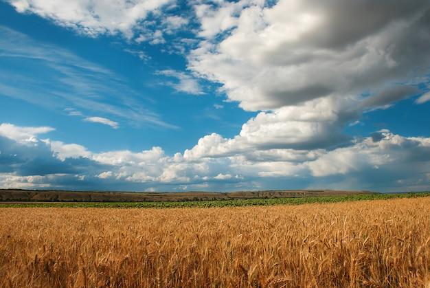 Champ de blé en journée nuageuse en été